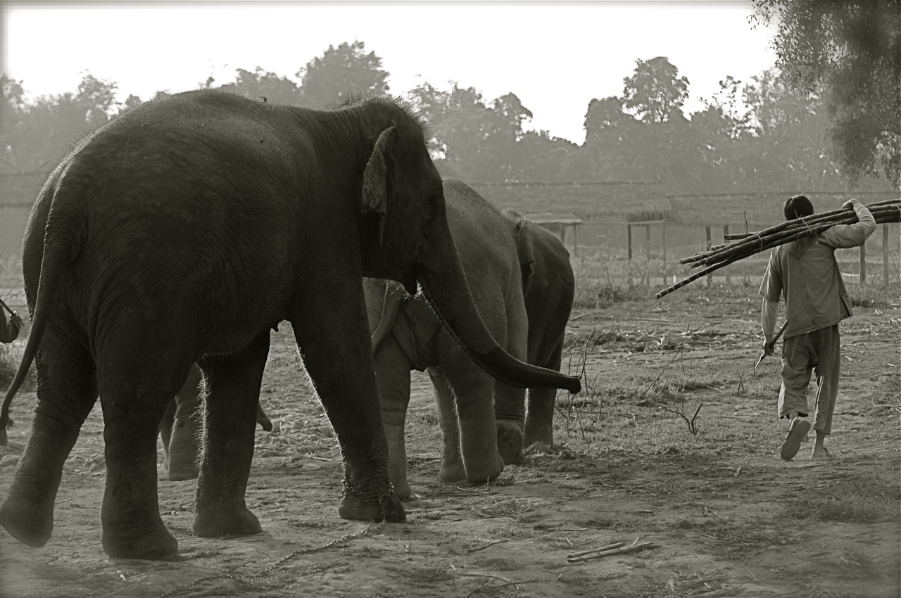 091219_ATB165_THA_Chiang Rai_Anantara_Elephants