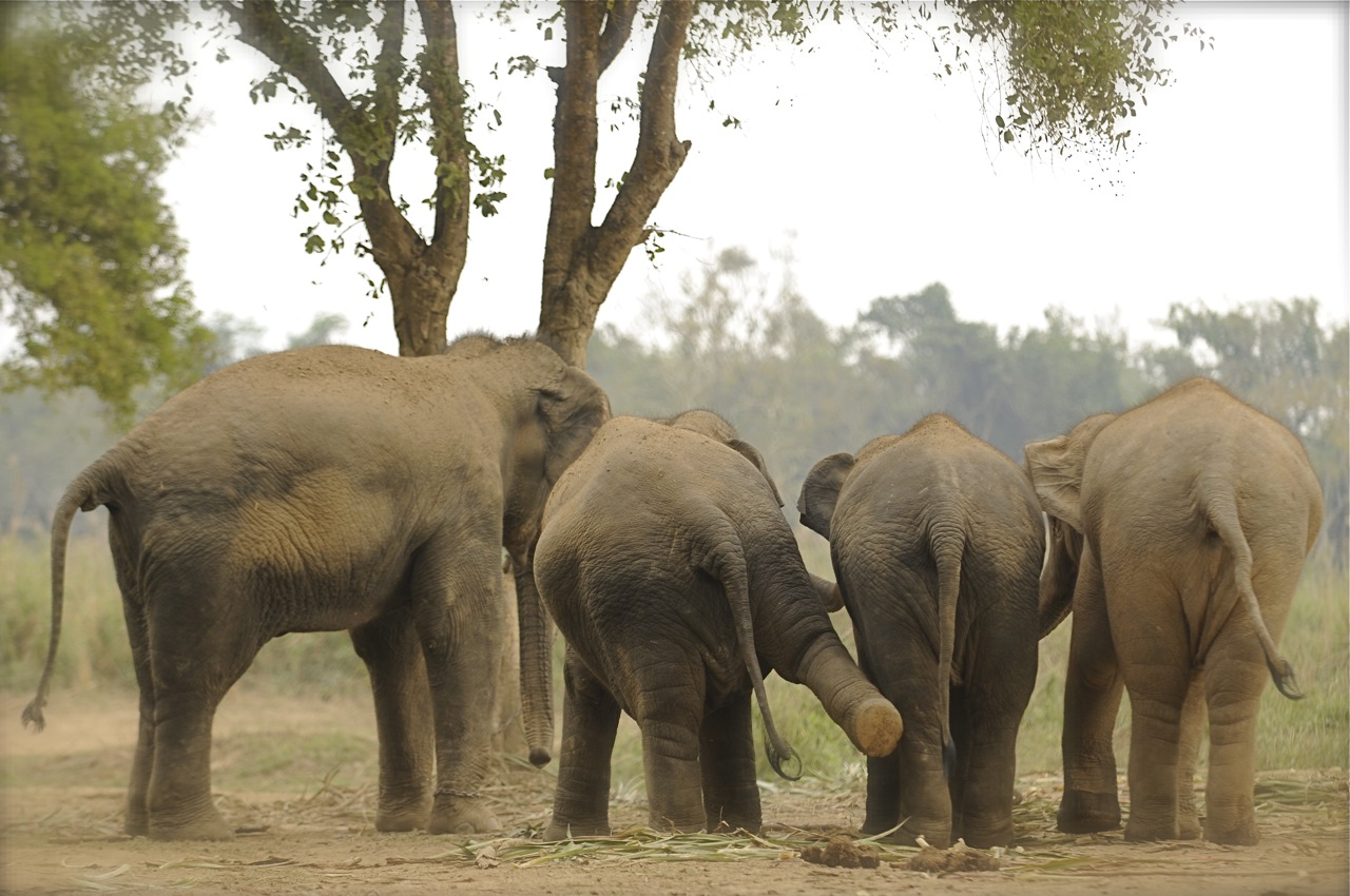 091219_ATB340_THA_Chiang Rai_Anantara_Elephants