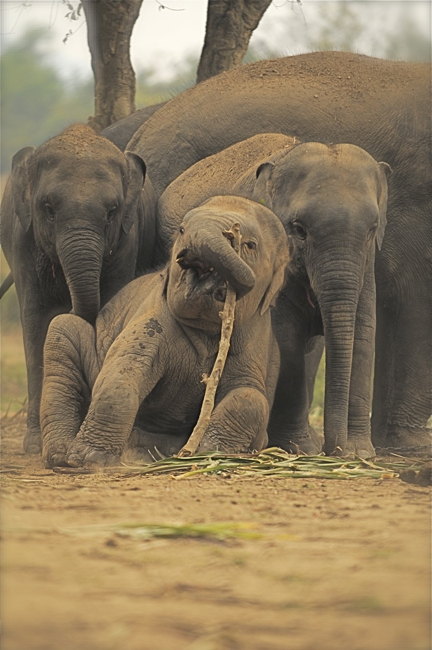091219_ATB351_THA_Chiang Rai_Anantara_Elephants